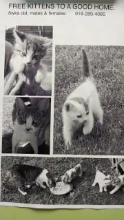 Free kittens July 9 2014