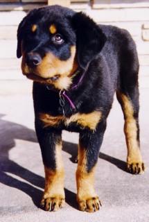 Kali Nov 1995