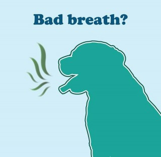 doggy bad breath